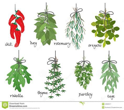 Conselhos Para Ter Plantas Aromáticas em Casa | Flores ...