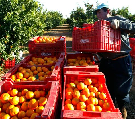 Conselleria de Agricultura abre una consulta pública para ...