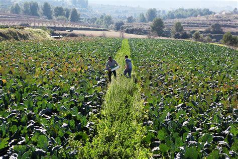 Conselleria de Agricultura destina 24,5 millones de euros ...