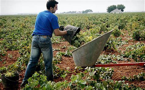 Conselleria publica las ayudas a jóvenes agricultores con ...