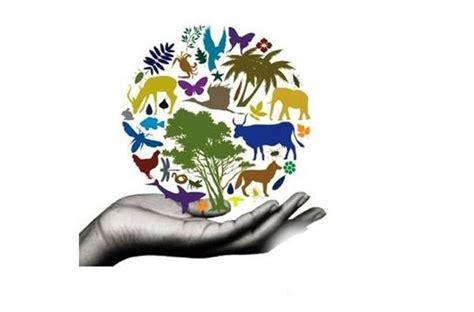 Conservación de la Biodiversidad y Su Importancia | Medio ...