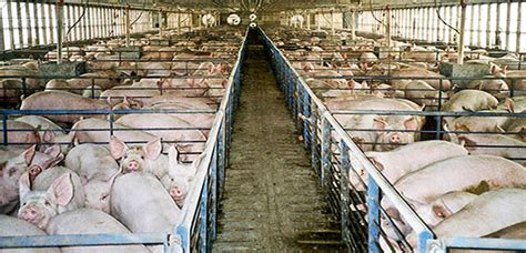 Consume menos carne | Terra.org   Ecología práctica