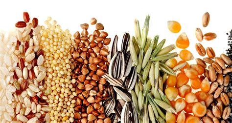 Consumo de granos andinos llega a 2.3 kilogramos per ...