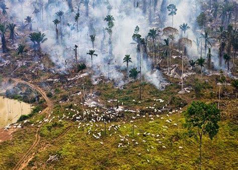 Contaminación ambiental: Qué es, tipos de contaminación ...