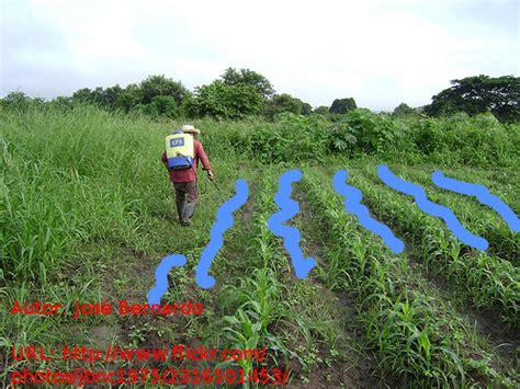 Contaminacion de mantos acuiferos por agroquímicos ...