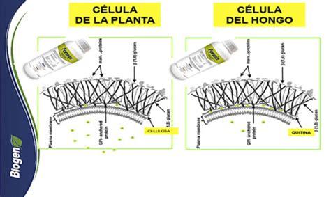 Control de hongos por disrupción de membrana mediante ...