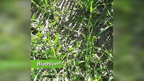 Control de malas hierbas de hoja ancha en trigo # ...