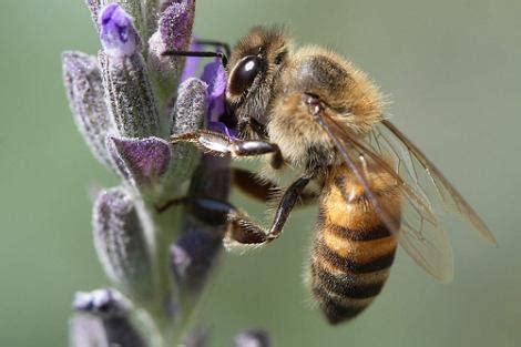 Control de Plagas en Sanidad Ambiental: Las abejas ...