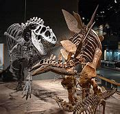 Controversies in Science/What killed the dinosaurs ...
