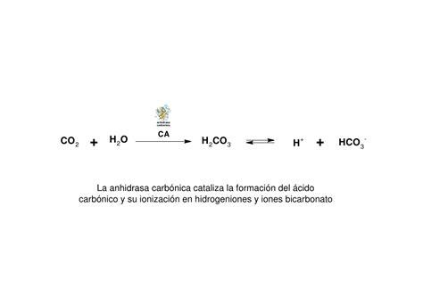 Copia de anhidrasa carbónica