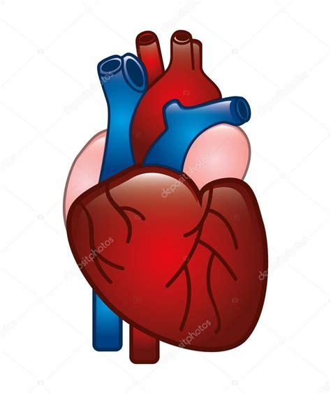 Coração humano — Vetor de Stock  yupiramos #30302961