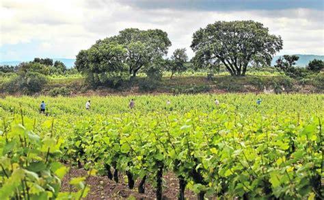 Coronavirus en La Rioja: Agricultura amplía a 80 ...