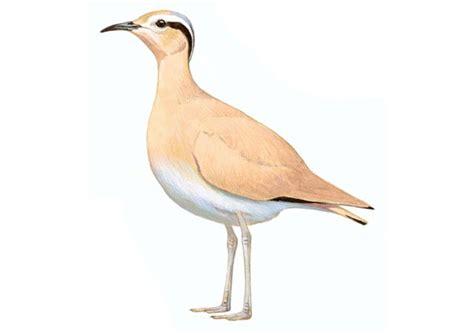 Corredor sahariano | SEO/BirdLife