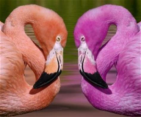 Cosas de Pájaros. Picos y Patas | Animales en Video