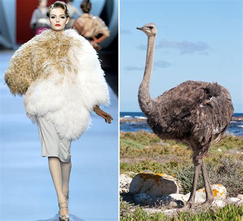 Couture Spring 2011 Shows: Wild Animals In Paris   StyleCaster