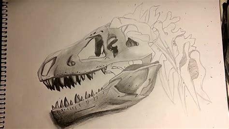 Craneo de dinosaurio | Dibujo   YouTube