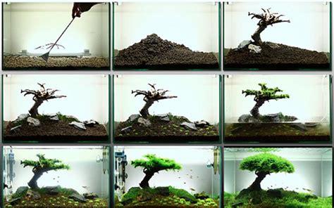 Crear un arbol natural con musgo de java   Comercial ...