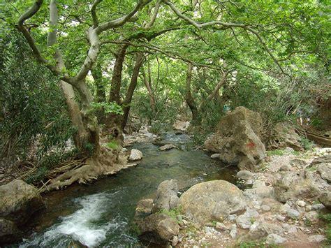 Crete Mediterranean forests   Wikipedia