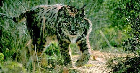 Criptozoología en España: Animales en peligro de extinción ...
