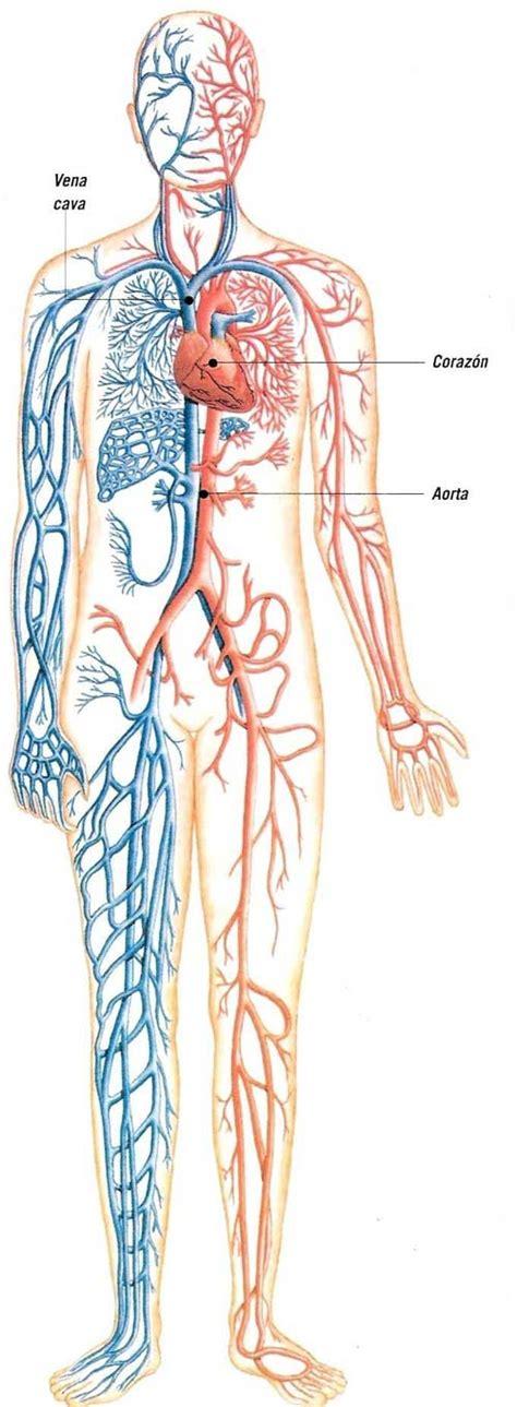 Cuaderno De Aula: Aparato circulatorio