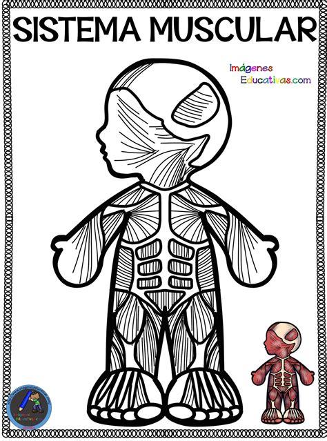 Cuaderno para colorear El Cuerpo Humano  11  – Imagenes ...