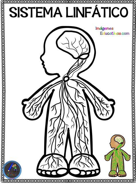 Cuaderno para colorear El Cuerpo Humano  12  – Imagenes ...