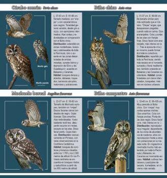 Cuadernos de Naturaleza Tundra: Nº 2. Rapaces nocturnas ...