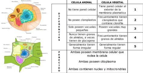 Cuadros comparativos entre celulas animales y vegetales ...