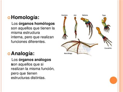 Cuadros comparativos entre Homología y Analogía | Cuadro ...
