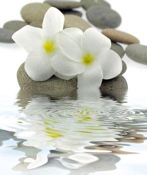 Cuadros y lienzos a medida zen   Flores, Imagenes de spa ...