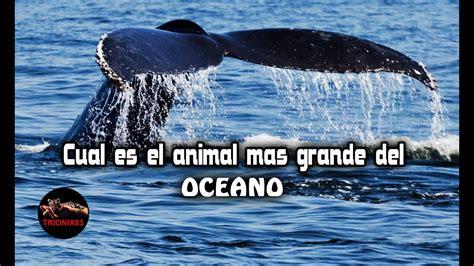 ¿Cual es el animal mas grande del oceano? Cosas que no ...