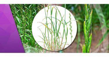 ¿Cuál es el mejor herbicida para quitar las malas hierbas ...