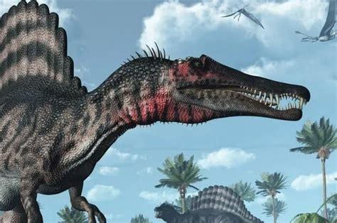 ¿Cuál es el valor de un diente de dinosaurio real?   Amigo ...