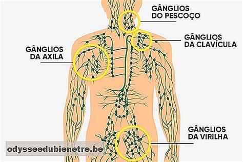 ¿Cuál es la función de los ganglios linfáticos y dónde se ...