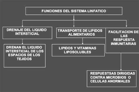 Cuál es la función del sistema linfático   Sistema linfatico
