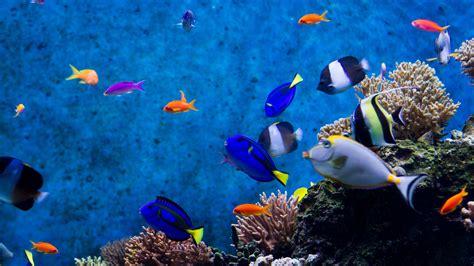 ¿Cuál es tu animal marino favorito?   Animales y ...