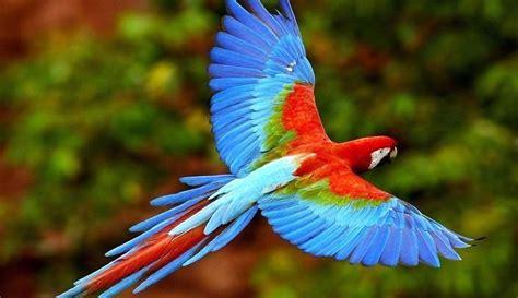 ¿Cuales son las características fauna de américa? ️ ...