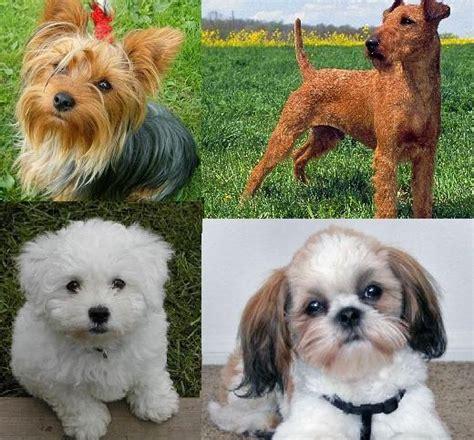 Cuáles son las mejores mascotas para niños con asma