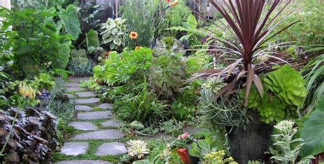 ¿Cuáles son las mejores plantas de exterior para jardines?