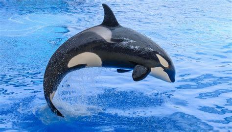 ¿Cuáles son los cinco animales marinos más grandes?