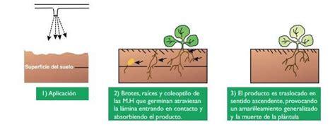 ¿Cuáles son los mejores herbicidas para tu cultivo ...