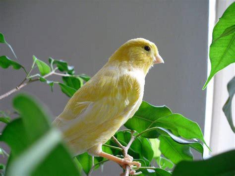 Cuáles son los mejores pájaros para tener como mascota ...