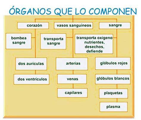 Cuáles son los órganos del sistema circulatorio   Sistema ...