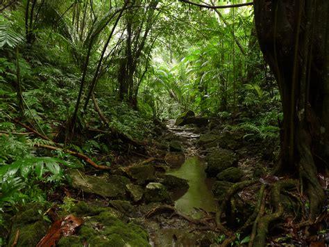 ¿Cuales son los tipos de selva?   Ara blog