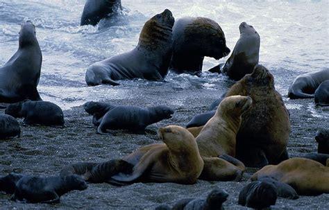 Cuántas especies de león marino hay – Sooluciona