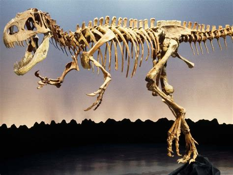 ¿Cuánto cuesta un esqueleto de dinosaurio? | Esqueleto ...