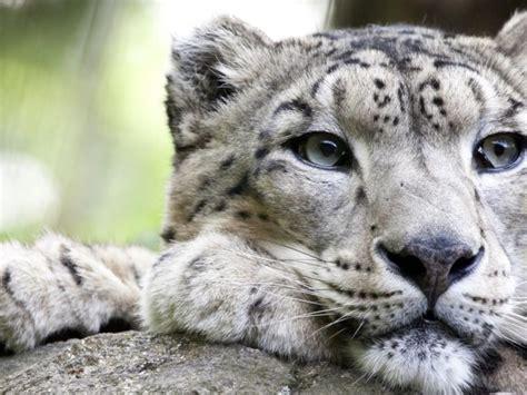 ¿Cuánto sabes sobre especies en peligro de extinción?