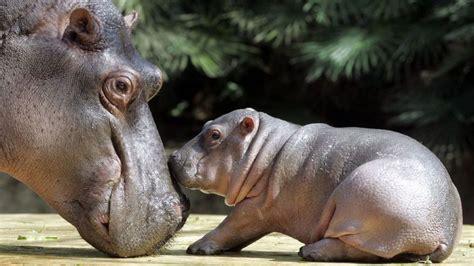 ¿Cuántos animales nacen cada día en el mundo?   Tele 13
