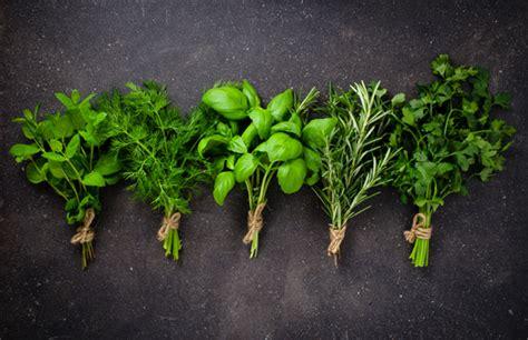 Cuatro hierbas aromáticas que no deben faltar en tu cocina ...