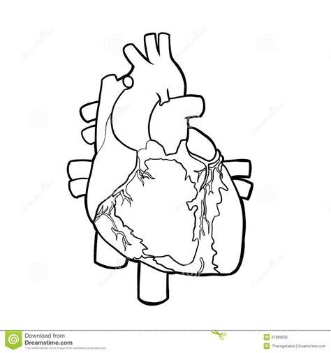 cuerpo humano sistema circulatorio blanco y negro   Buscar ...